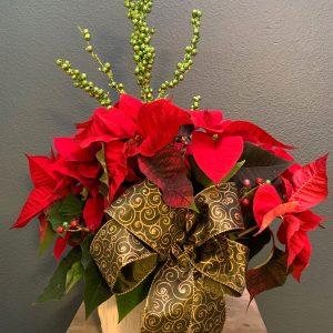 Red Poinsettia Marysville