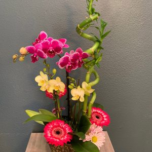 Orchids and Orchid Plant Delivery